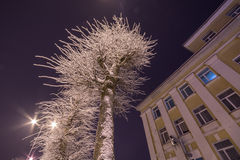 Winter city landscape. Frozen trees and buildings. Cold night. Royalty Free Stock Images