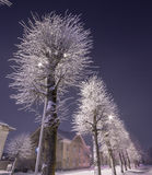 Winter, city landscape. Frozen trees and buildings. Cold night. Royalty Free Stock Photography