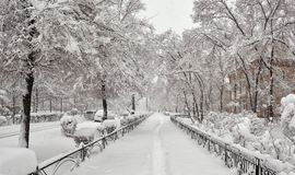 Winter city landscape. City landscape. City, morning. A snowstorm in the city. Streets, paths, trees, lanterns are covered with snow. Abakan, Republic of Royalty Free Stock Photo