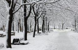 Winter city park Royalty Free Stock Photo
