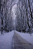 Winter city park Stock Image