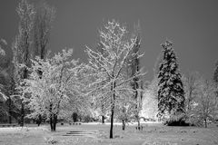 Winter city park in evening. Stock Image