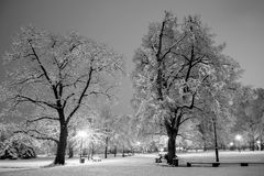 Winter city park in evening. Stock Photo