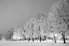 Winter city park in evening. Stock Photography