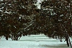 Winter city park Gagarin Dnepropetrovsk. Gagarin Park Dnepropetrovsk winter common species of plantations Stock Photography