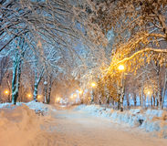 Winter city park Royalty Free Stock Images