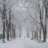 Winter city park in morning Royalty Free Stock Photography