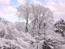 Trees under a snow in city park royalty free stock photography
