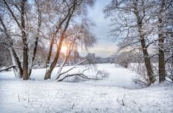 Winter in the city park. And snow-covered trees bent to each other on the shore of the pond Stock Photography