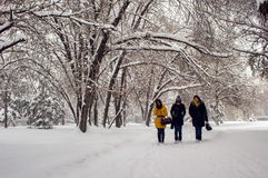 Winter in the city park. Royalty Free Stock Photos