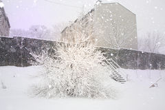 Winter city yard Stock Image