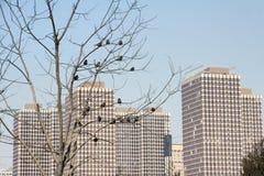 Winter cityscape Stock Photography