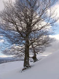 Winter in Ciucas Mountains Stock Photo