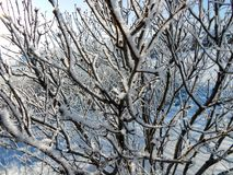 A winter clear day, a rural landscape with a rustic garden cover. Ed with snow. frozen branches of trees in rime against blue sky royalty free stock photo