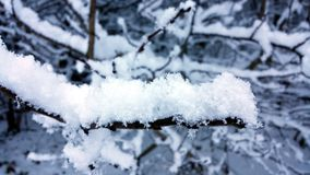 Winter close up. Snowy eiderdown on a branch Royalty Free Stock Image