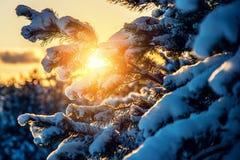 Winter Closeup Of Sunrise Orange Sunset Light Stock Photos