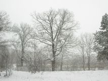 Winter landscape in the forest after a snowfall Royalty Free Stock Photo