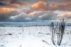 Winter coastal landscape with dry grass Royalty Free Stock Photo