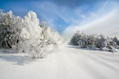 Winter. Cold winter and blue sky Stock Photography