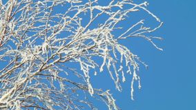 Winter and cold, blue sky and tree branches in the frost. A beautiful screen saver for a screen or a winter background. stock video