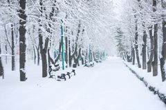 Winter cold day in park. Snow-covered trees and benches in the city park. Tree alignment in winter parkland royalty free stock images