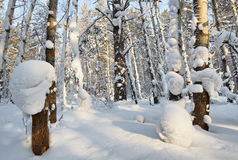 In the winter cold forest Stock Image