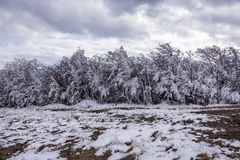 Winter Cold Iced Frozen Trees White Snow Fairytale Royalty Free Stock Photography