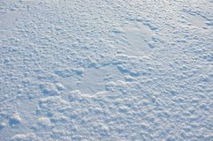 Winter cold snow. Stock Image