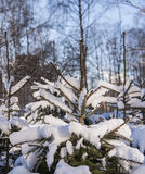 Winter cold snow green tree Royalty Free Stock Image