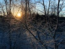 The winter is cold and sun is low. Ice is forming ice crystals on the branches.