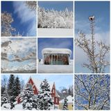 Winter collage with snow, forest - winter season - snowy trees stock photo