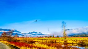 Winter colors of farmers` fields in Pitt Polder near Maple Ridge in the Fraser Valley of British Columbia, Canada. On a clear and cold winter day with Snow royalty free stock photography