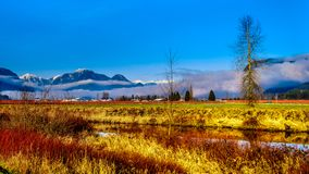 Winter colors of farmers` fields in Pitt Polder near Maple Ridge in the Fraser Valley of British Columbia, Canada. On a clear and cold winter day with Snow stock photo