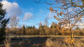 Winter Colors in the Field and Forest Stock Photo