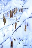 Winter colors Stock Photography