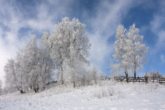 Winter colours Royalty Free Stock Photos