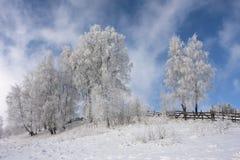 Winter colours Royalty Free Stock Photos