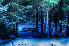 Winter comes early. First snow is always a surprising to most people Royalty Free Stock Photos