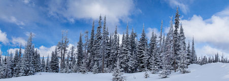 Winter Comes To Blacktail Mountain Royalty Free Stock Image