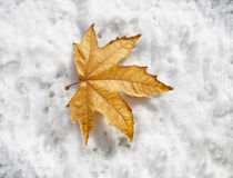 Winter coming. Single autumn leaf on snow showing winter is coming Royalty Free Stock Photos