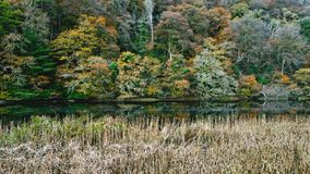 Winter is coming.  Autumn  trees on the banks of the tavy Royalty Free Stock Photos