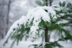 First snow as sign of coming winter Stock Image