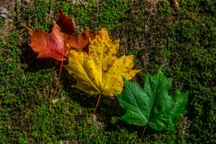 Winter is coming litle by litle. Autumn colors from Quebec Canada Royalty Free Stock Images