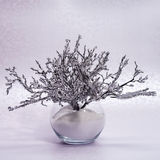Winter composition with a branch in hoarfrost in a glass vase Royalty Free Stock Photography