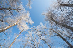 Winter composition Royalty Free Stock Photography