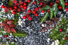 Winter concept of evergreen branches, red leaves and berry with Royalty Free Stock Photography