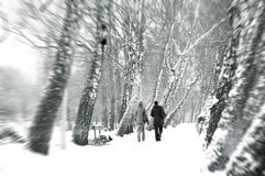 Winter conceptual image. Winter in park Stock Photo