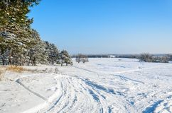 Forest in winter sunny day. Winter. Coniferous forest in frosty and sunny day Stock Image
