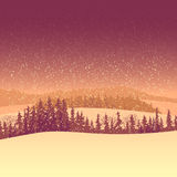 Winter coniferous forest in the morning. Royalty Free Stock Image
