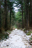 Winter in the coniferous forest. Winter road that runs along the coniferous forest Stock Images